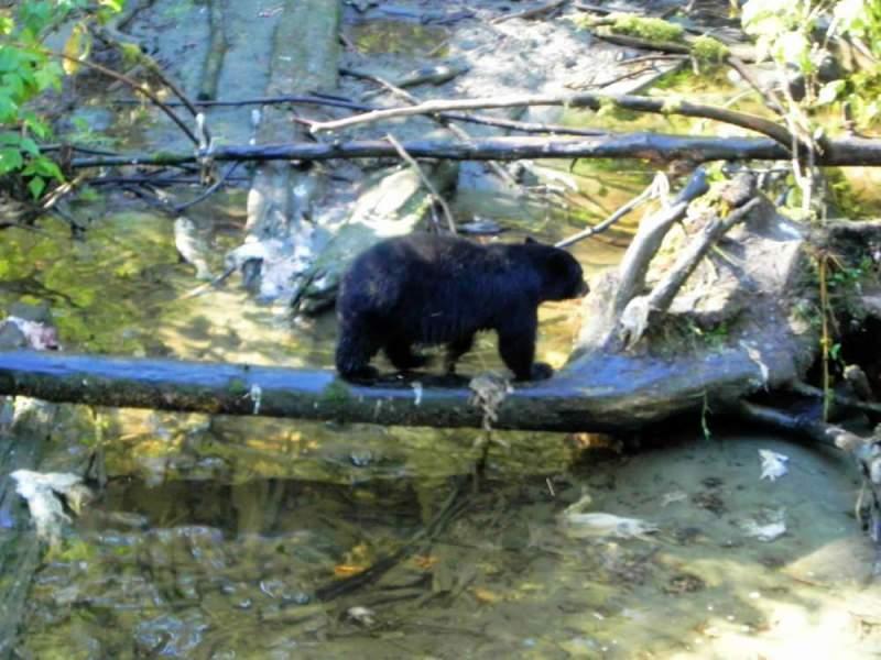 Bear-Pic-2