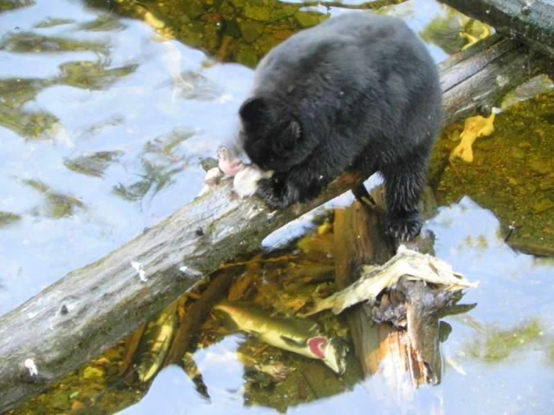 Bear-Pic
