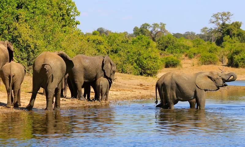 Elephants-African-Tour-800