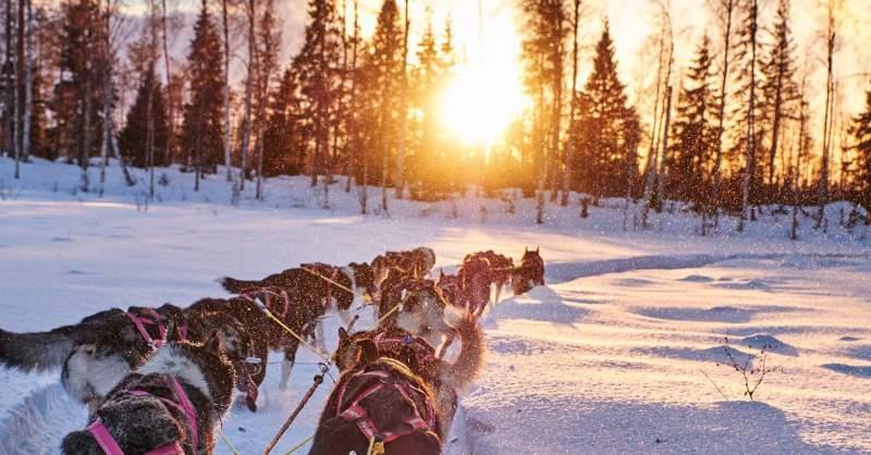 dog-sledding-with-huskies-swedish-lapland-conde-nast-traveller-22feb18-oivind-haug