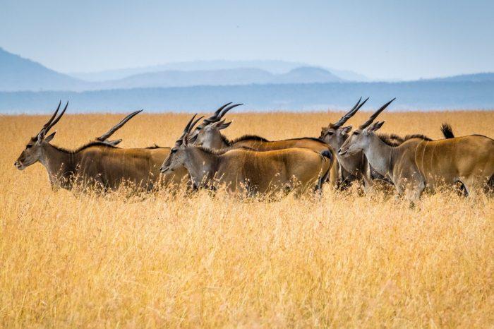 Safari – Africa