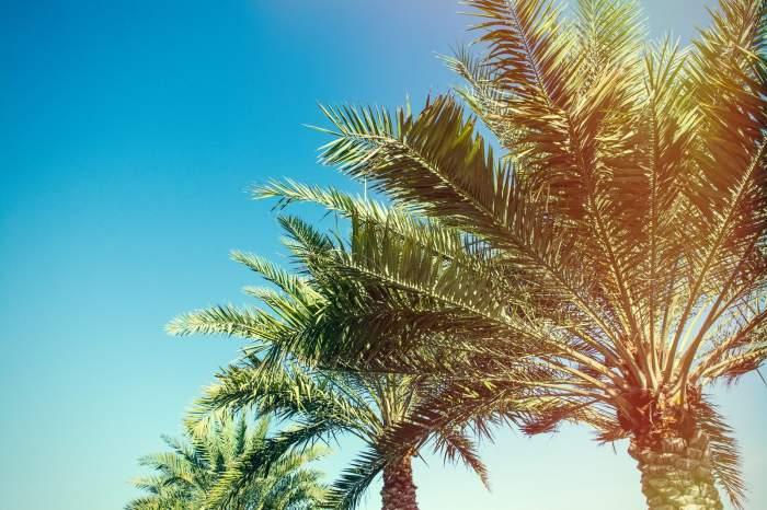 Orlando Stay & Western Caribbean Cruise on-board Oasis of the Seas