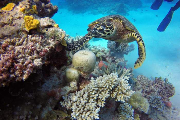 Great Barrier Reef Cruise Feb 2022